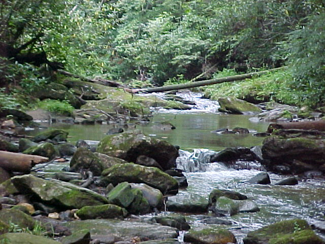 State Stocked Trout Stream at Log Cabin Rentals near Boone, NC, and Blowing Rock, NC